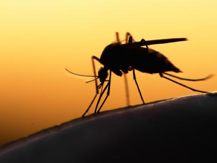 Tájékoztató a szúnyoggyérítésről