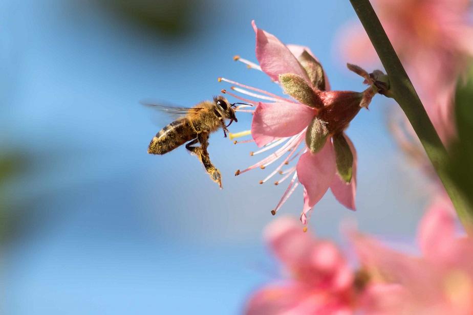 Nélkülük nincs élet: ma van a méhek világnapja
